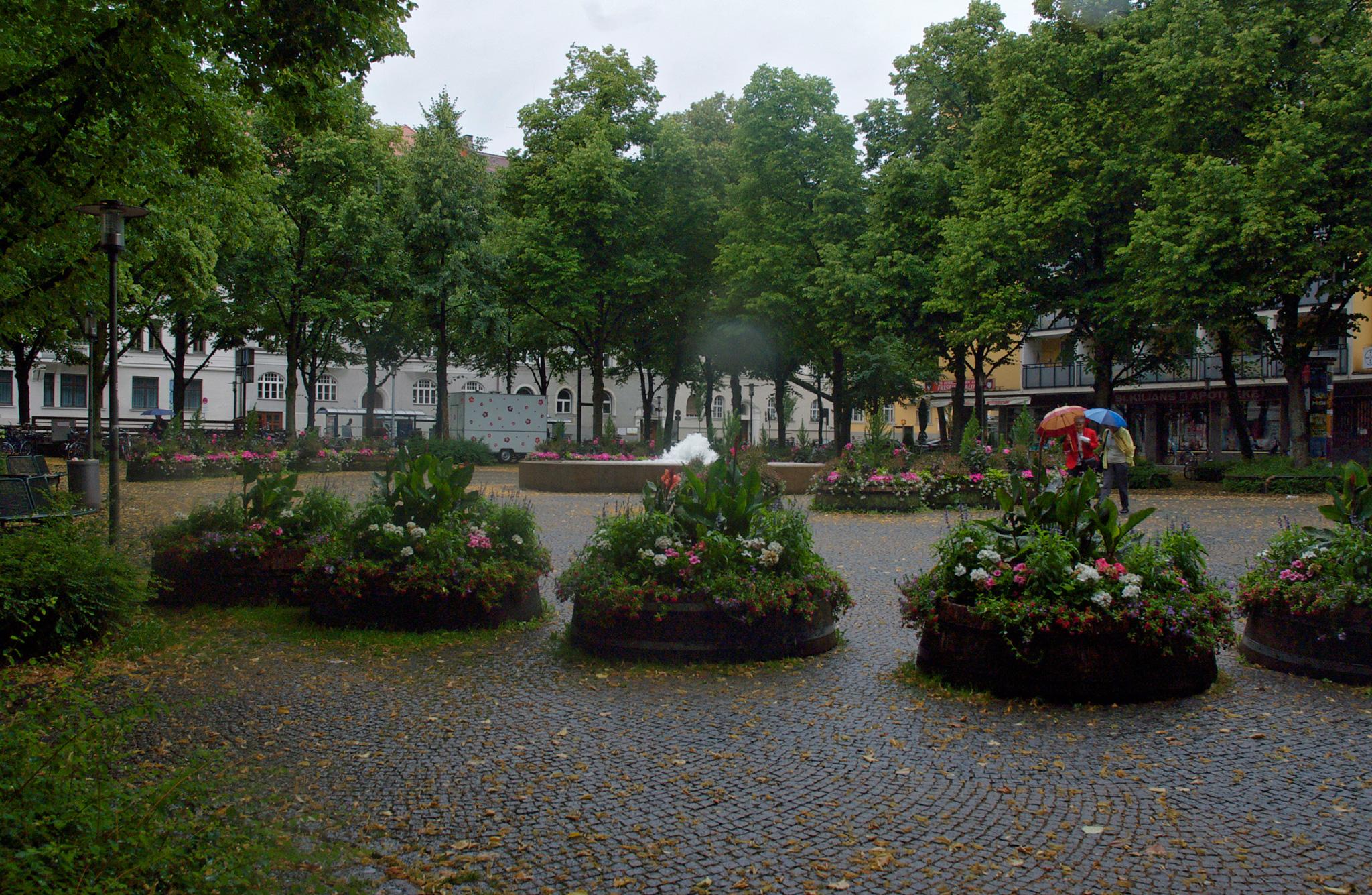 Juniregen am Hohenzollernplatz in München Schwabing
